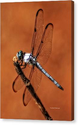 Canvas Print featuring the photograph Dragonfly by Yvonne Emerson AKA RavenSoul