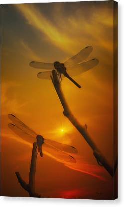 Dragonflys In The Sunset Canvas Print by Tom York Images