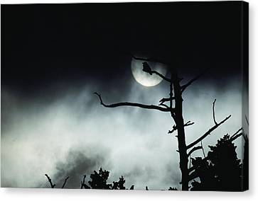 Dramatic Scene Of A Dead Tree Canvas Print by Michael S. Quinton