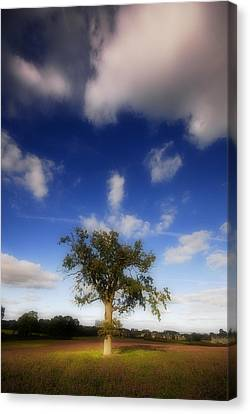 Canvas Print featuring the photograph Dream Catcher by John Chivers