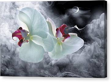 Dream-fly Canvas Print by Manfred Lutzius