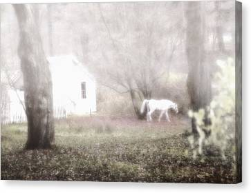 Canvas Print featuring the photograph Dream Horse by Marianne Campolongo