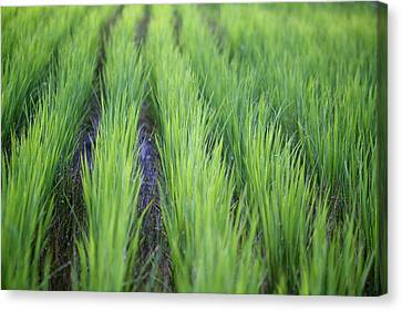 Dream Like Green Canvas Print by Jasohill Photography