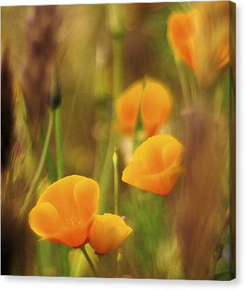 Dream Poppies Canvas Print by Ralph Vazquez