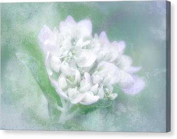 Dreaming Floral Canvas Print by Brenda Bryant