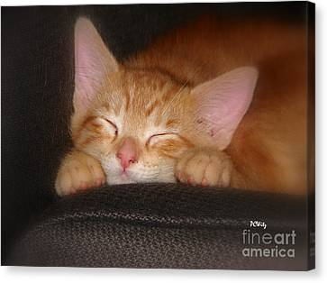 Dreaming Kitten Canvas Print by Patrick Witz