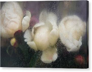 Dreaming Of Rembrandt Canvas Print by Lynn Wohlers