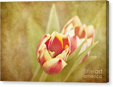 Dreaming Of Spring Canvas Print by Cheryl Davis