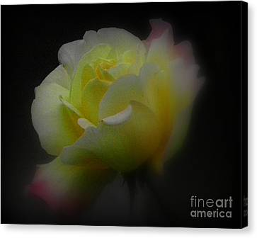 Dreams Are Made Of These Canvas Print by Carol  Hynes