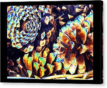 Canvas Print featuring the photograph Dreamtime Pinecones by Susanne Still