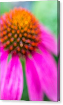 Dreamy Abstract Coneflower  Canvas Print