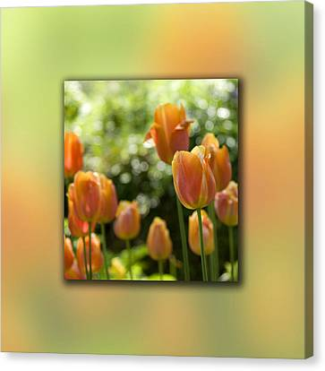 Dreamy Tulip Flowers Canvas Print by Pixie Copley