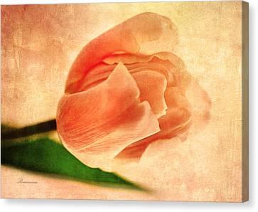 Dreamy Vintage Tulip Canvas Print by Georgiana Romanovna