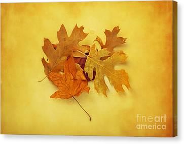 Dried Autumn Leaves Canvas Print
