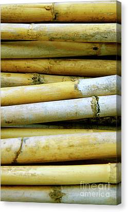 Dried Canes Canvas Print by Carlos Caetano