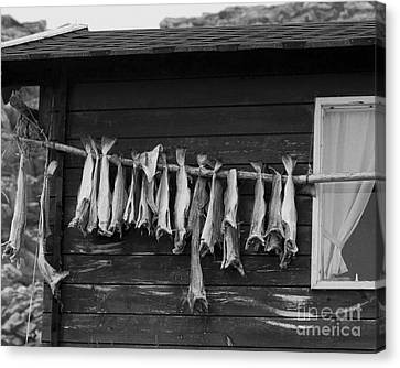 Dried Cod On A Line Canvas Print by Heiko Koehrer-Wagner