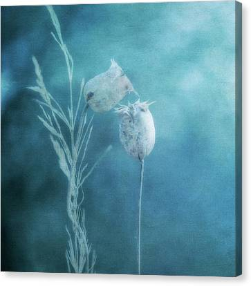 Dried Nigella Damascena As Dreamlike Characters Canvas Print by Alexandre Fundone