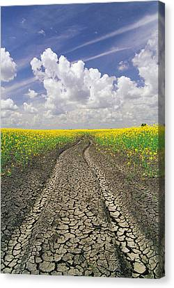 Dried Up Machinery Tracks Canvas Print by Dave Reede