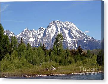Driftwood And The Grand Tetons Canvas Print by Living Color Photography Lorraine Lynch