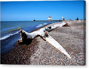 Canvas Print featuring the photograph Driftwood At Erie by Michelle Joseph-Long