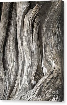 Driftwood Design 53 Canvas Print by Larry Lawhead