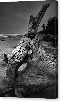 Driftwood On Beach Canvas Print by Steven Ainsworth