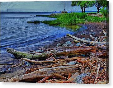 Driftwood On Shore Canvas Print by Trudy Wilkerson
