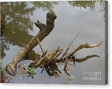 Canvas Print featuring the photograph Driftwood by Renee Trenholm