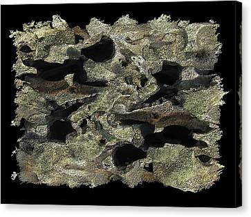 Driftwood Study Canvas Print by Tim Allen