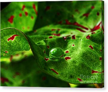Canvas Print featuring the photograph Droplet by Deborah Smith