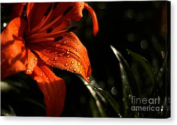 Canvas Print featuring the photograph Droplets On Flower by Vilas Malankar