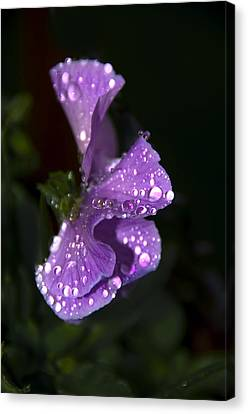 Drops Of Rain Canvas Print by Svetlana Sewell