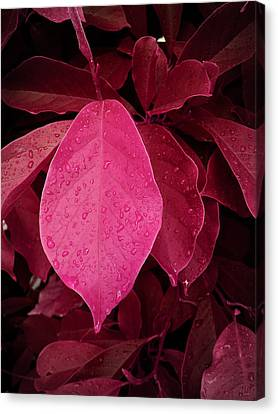 Drops On Red Canvas Print by Nafets Nuarb