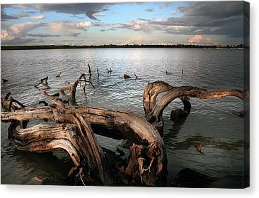 Dry Lake Canvas Print - Dry Log In A Lake by Stelios Kleanthous