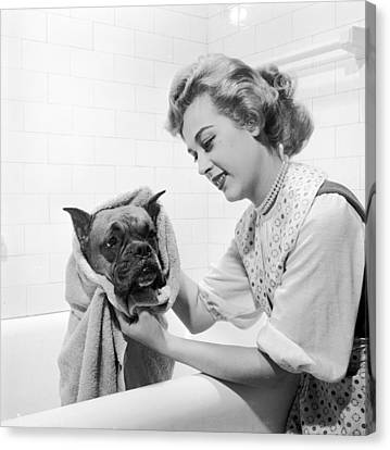 Domestic Bathroom Canvas Print - Drying Doggy by Three Lions