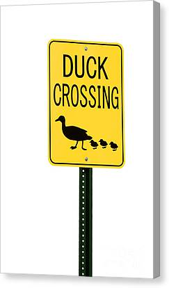 Ducklings Canvas Print - Duck Crossing Sign by Blink Images