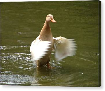 Canvas Print featuring the photograph Duck Flapper by Wendy McKennon