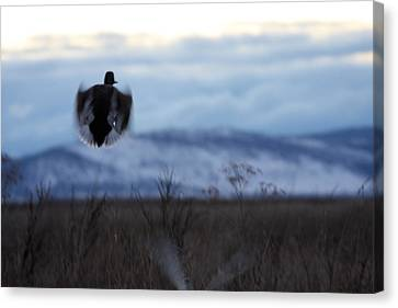 Duck Silhouette - 0001 Canvas Print by S and S Photo