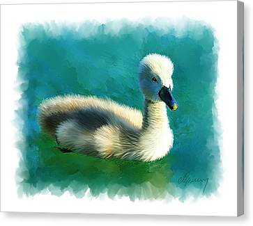 Duckling Canvas Print by Michael Greenaway