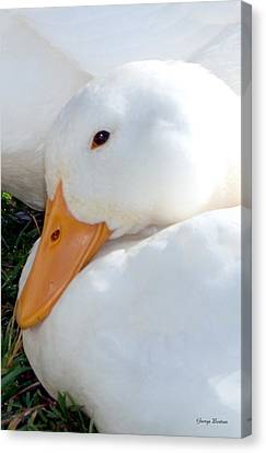 Canvas Print featuring the photograph Ducks 002 Tribble Mill by George Bostian