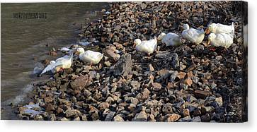 Canvas Print featuring the photograph Ducks In A Row by Brian Stevens