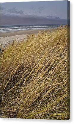 Dune Grass On The Oregon Coast Canvas Print by Mick Anderson