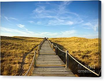 Silica Canvas Print - Dune Walkway by Carlos Caetano