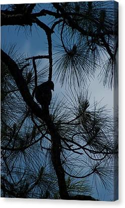 Canvas Print featuring the photograph Dusk by Joseph Yarbrough