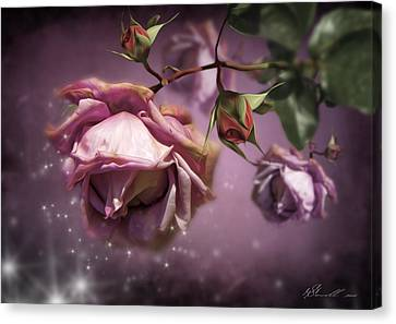 Dusky Pink Roses Canvas Print by Svetlana Sewell