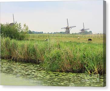 Dutch Landscape With Windmills And Cows Canvas Print by Carol Groenen