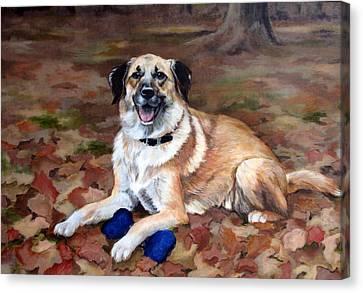 Dutch Shepherd Canvas Print