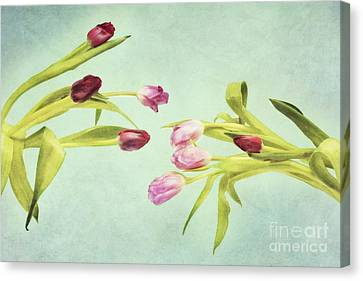 Eager For Spring Canvas Print by Priska Wettstein