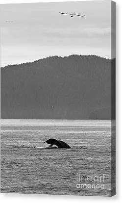 Eagle And The Whale Canvas Print by Darcy Michaelchuk