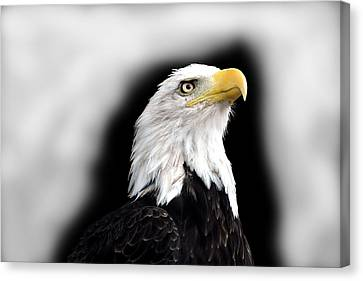 Eagle Canvas Print by Barry Shaffer